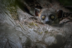 Andasibe_Tierfotografie2