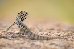 Andringitra_Tierfotografie1